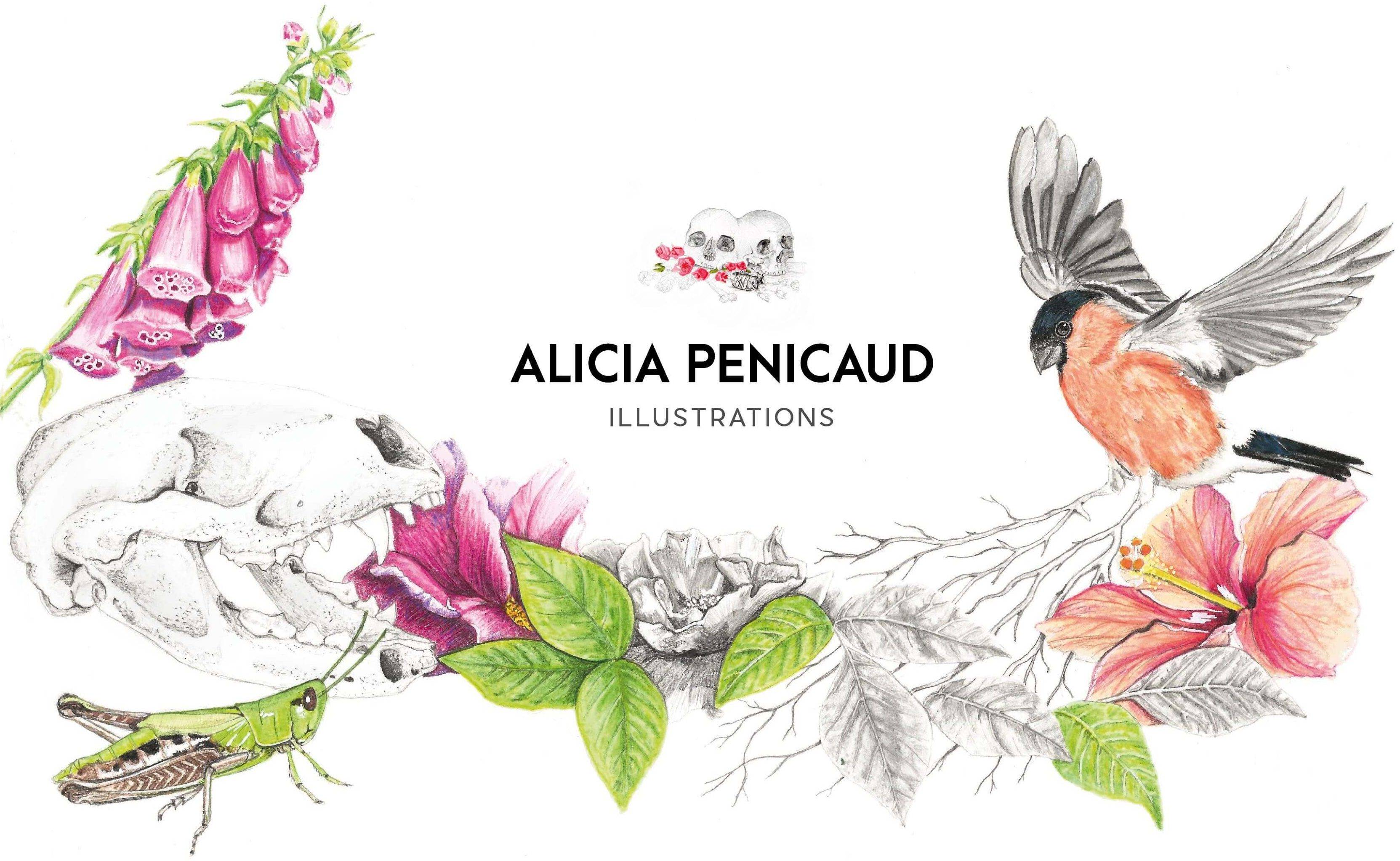 Alicia Penicaud Illustrations
