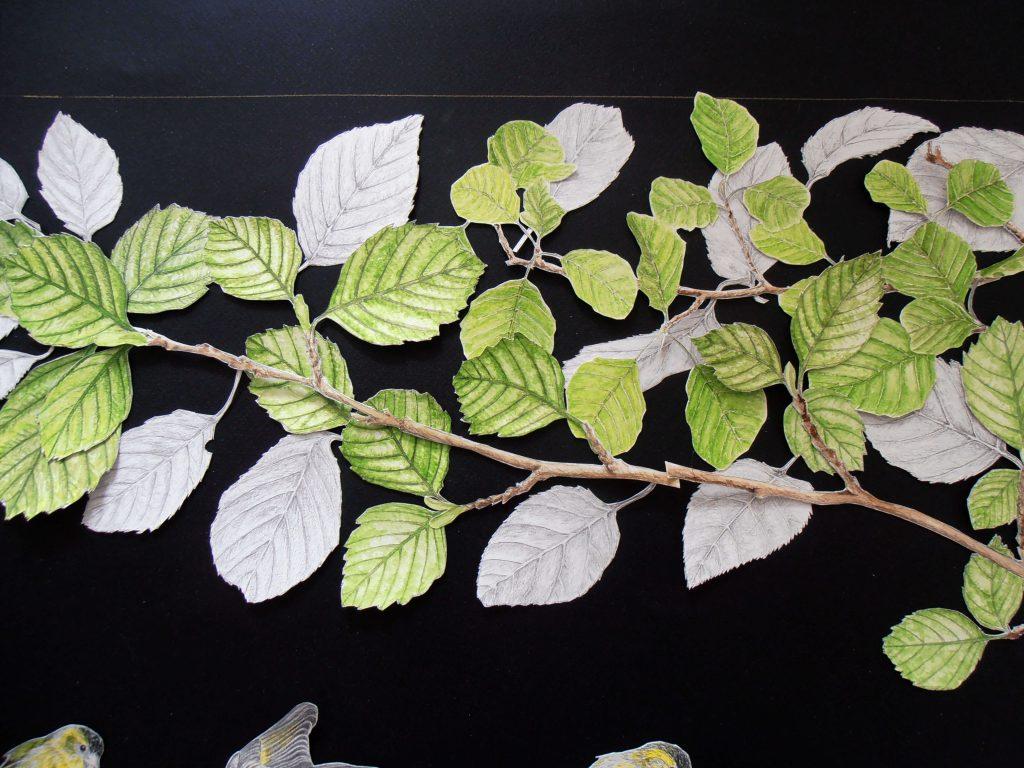 branches et feuilles d'aulne