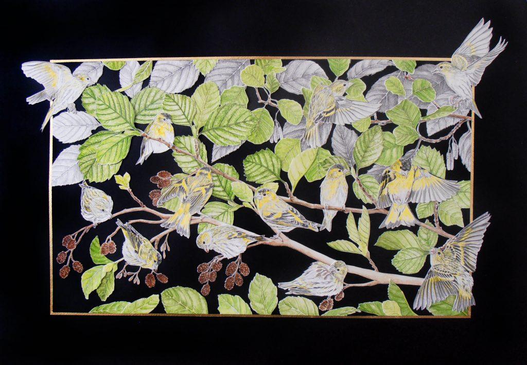 vue d'ensemble collage tarins des aulnes
