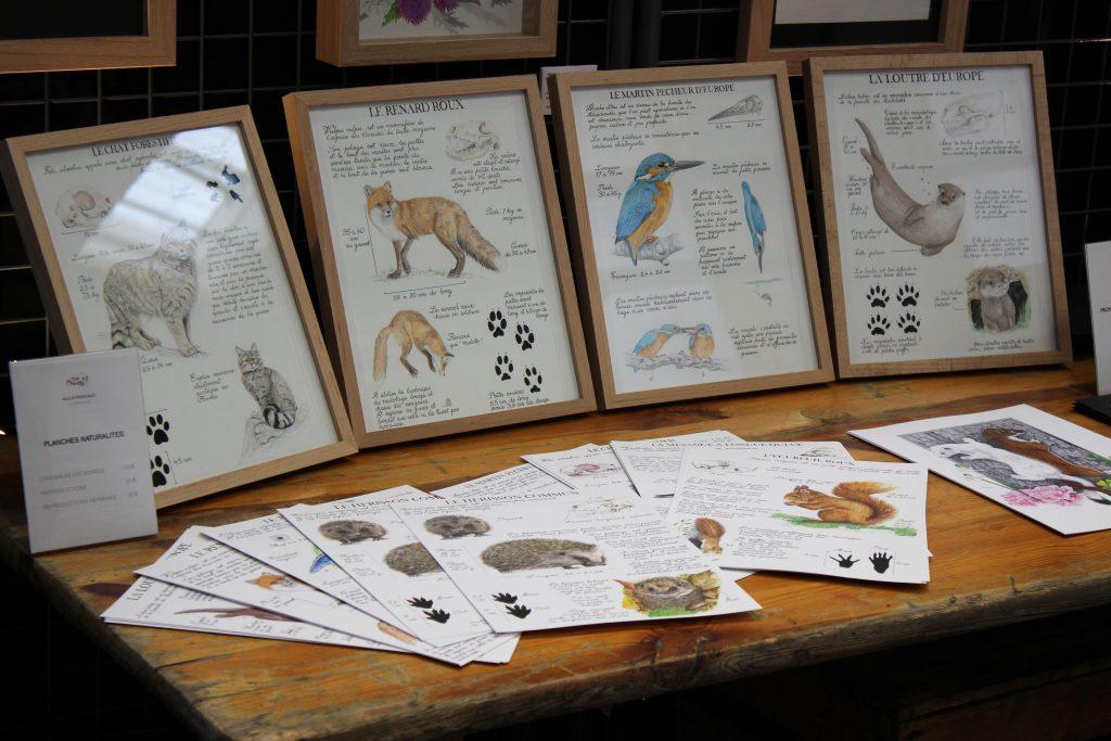 stand Natur'Armor illustrations Alicia Penicaud