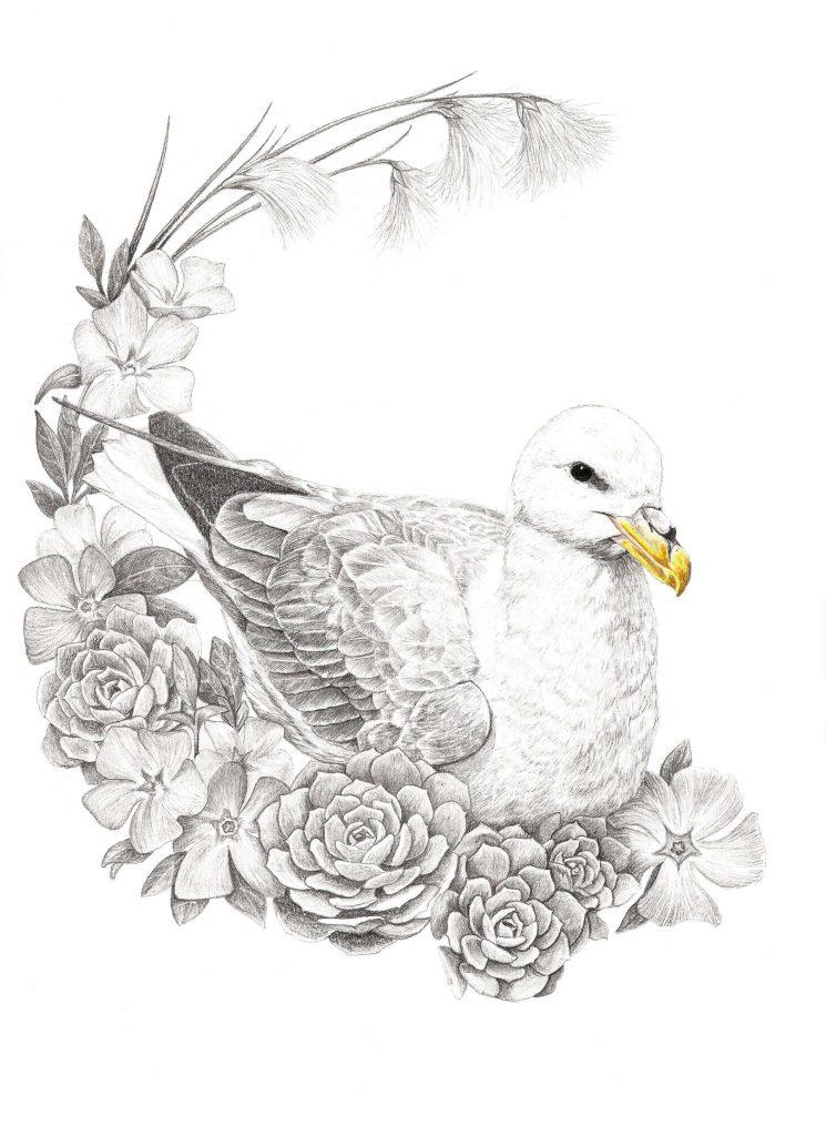Illustration animalière, fulmar boréal art animalier, dessin animalier oiseau, portrait animalier, animaux, botanique, illustration faune et flore