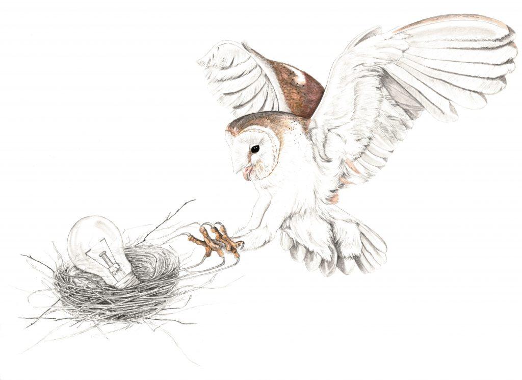 Illustration chouette effraie,  art animalier, dessin animalier oiseau, rapace, portrait animalier, animaux, botanique