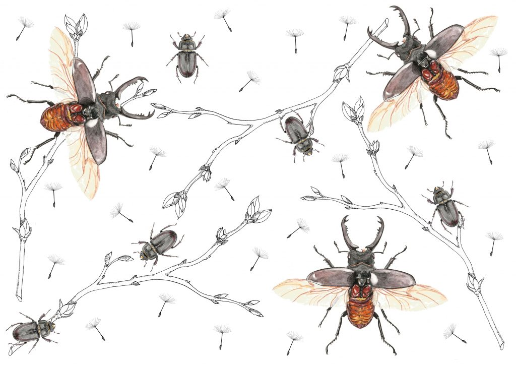Illustration entomologique lucanes cerf-volants scarabées insectes, motif, pattern design