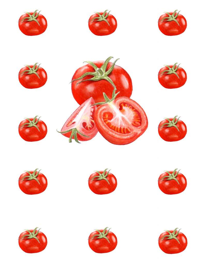 illustration motif tomates, illustration botanique tomates