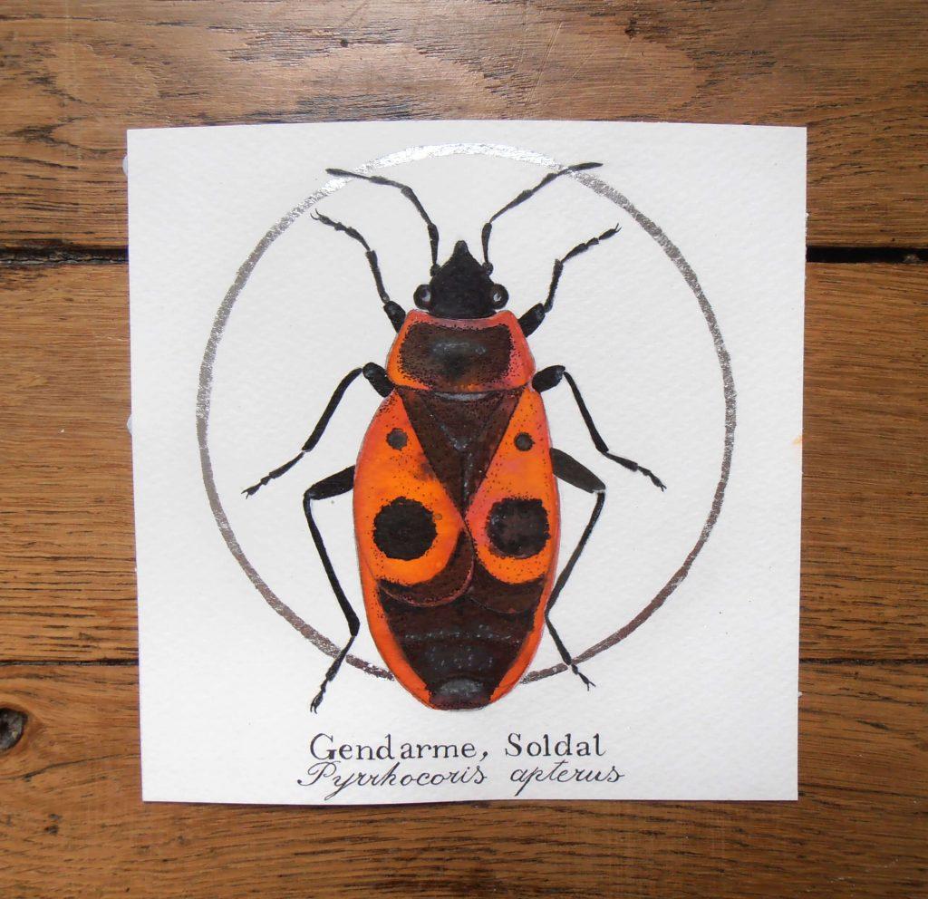 Illustration naturaliste entomologique du gendarme.