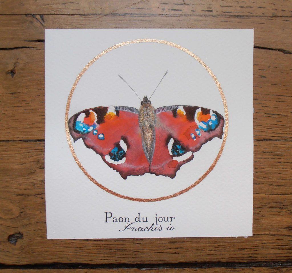 Illustration naturaliste entomologique du papillon le paon du jour.