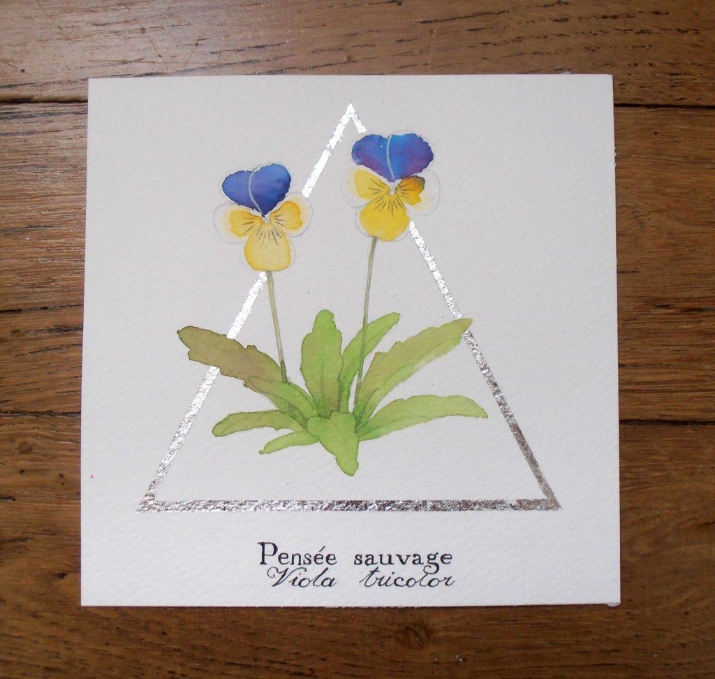 Illustration naturaliste botanique à l'aquarelle, pensée sauvage
