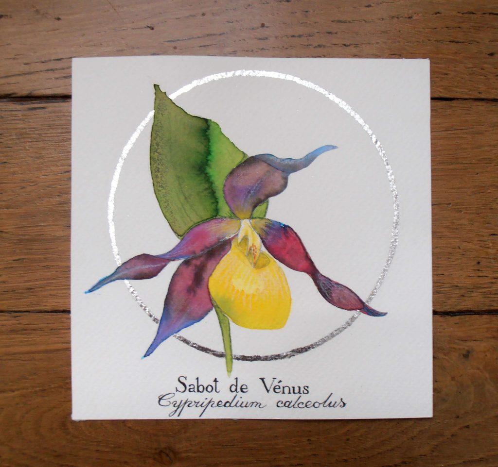 Illustration naturaliste botanique à l'aquarelle, sabot de Vénus