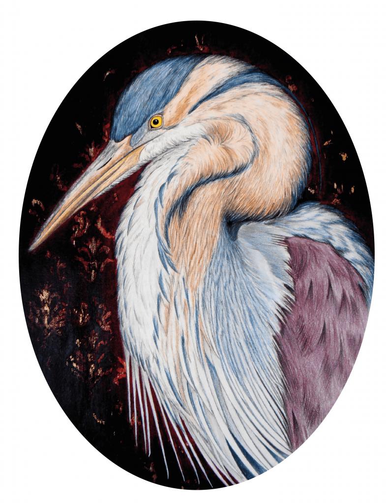 illustration naturaliste du héron pourpré