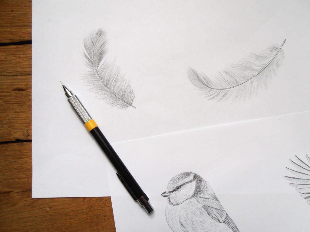 Illustrations de plumes et de mésange bleue au graphite.
