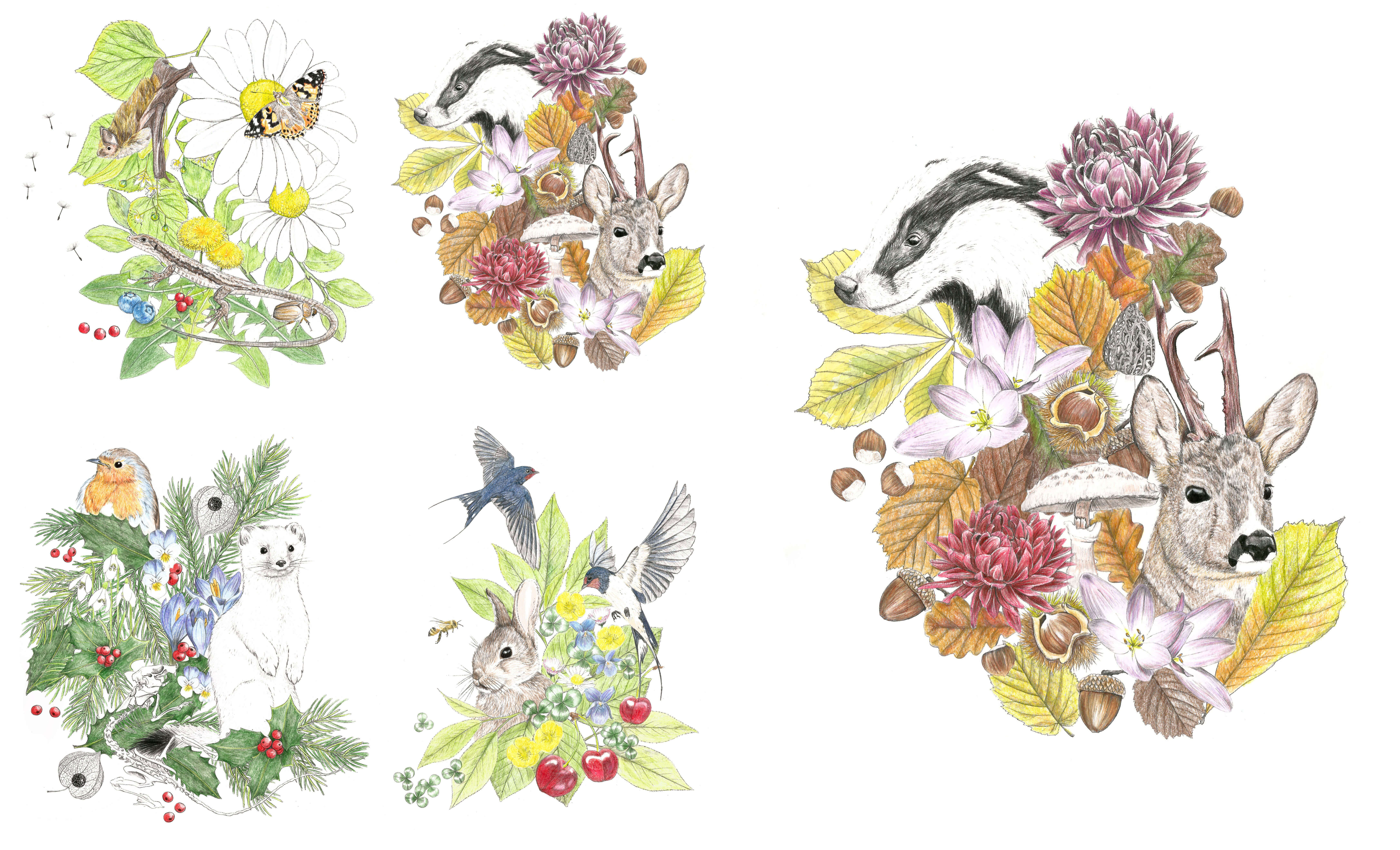 Illustrations animalière et botanique des saisons, automne, hiver, printemps été, animaux et végétations