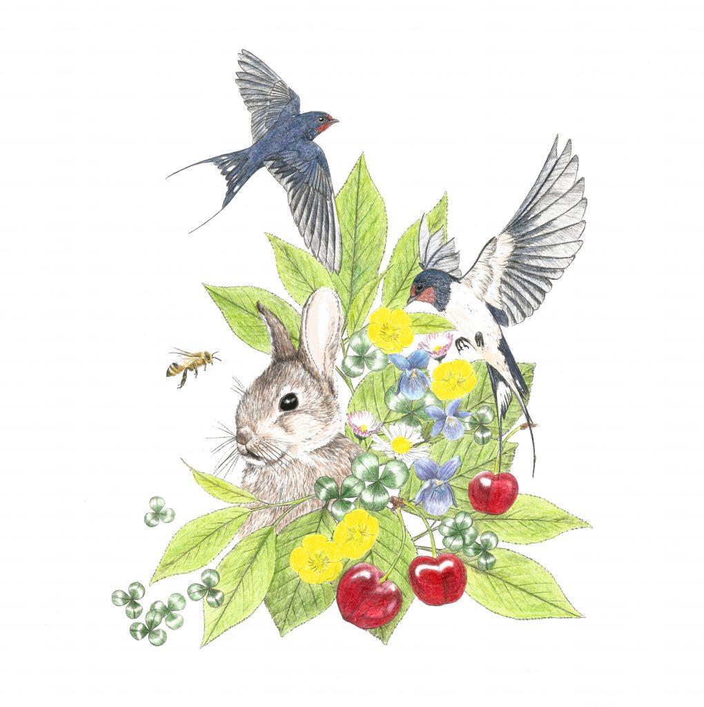 création de motif printemps, illustration naturaliste et botanique, lapereau, hirondelle, abeille, cerises, boutons d'or, trèfles