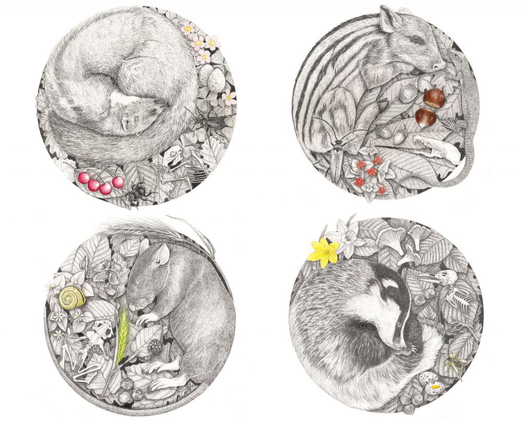 Série animaux endormis, illustration naturaliste, art animalier, botanique, entomologique, faune et flore d'Europe, dessin contemporain