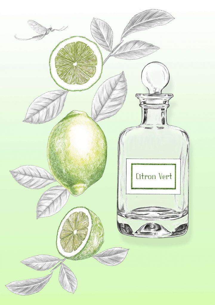 Illustration packaging, publicitaire, beauté, citron vert