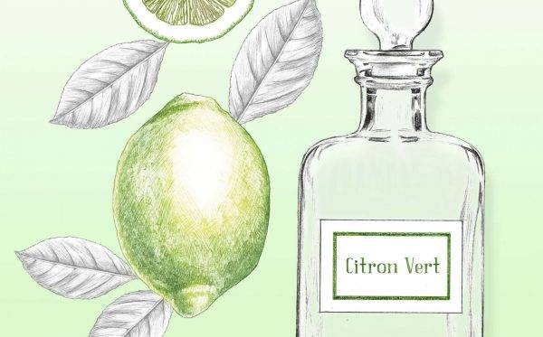 Illustrations packaging cosmétique