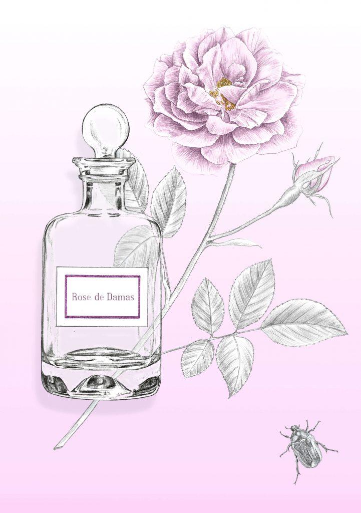 Illustration packaging, publicitaire, beauté, rose de Damas