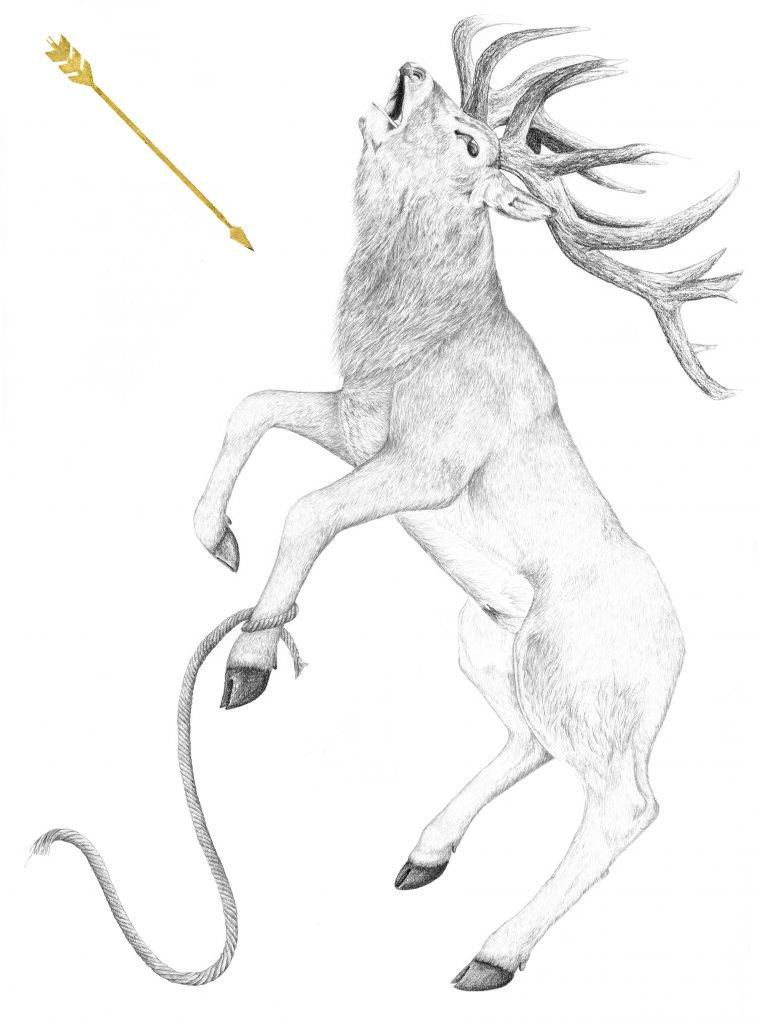 Cyparisse, Apollon, illustration, dessin contemporain, art animalier, mythologie, cerf élaphe, graphite