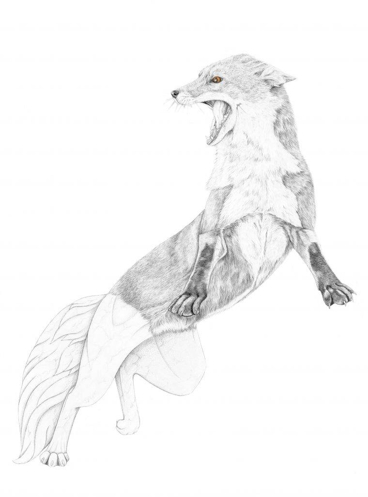 renard de Teumesse, illustration, graphite, mythologie, dessin contemporain, art animalier