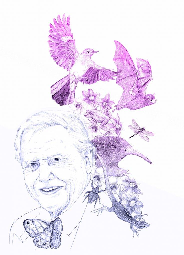 Illustration naturaliste, portrait dessiné, David Attenborough, dessin