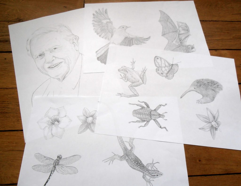 Illustrations naturalistes, David Attenborough, animal, entomologie, botanique illustration