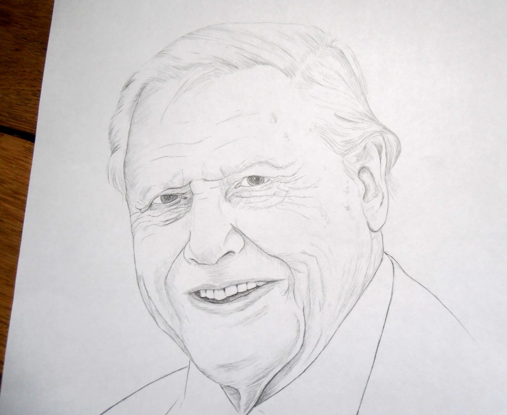 Portrait, illustration David Attenborough, dessin