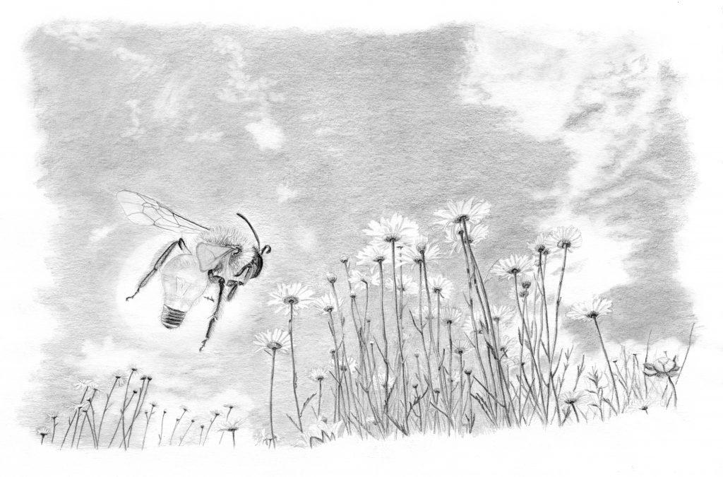dessin contemporain, entomologie, illustration, graphite, insecte hybride, abeille, marguerite, botanique