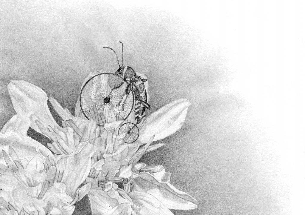 dessin contemporain, entomologie, illustration, graphite, insecte hybride,  fleur de verge d'or