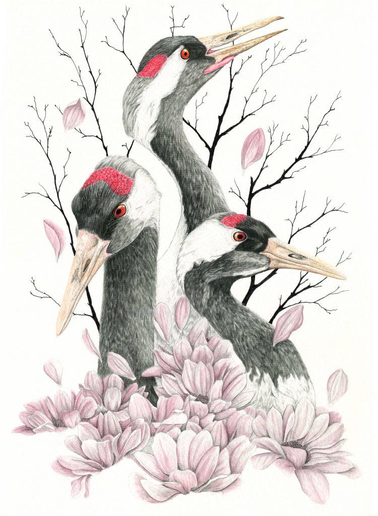 Illustration grues cendrées,  art animalier, dessin animalier oiseau, botanique,