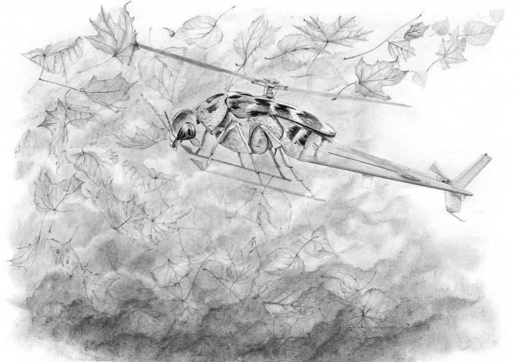 dessin contemporain, entomologie, illustration, graphite, insecte hybride, hélicoptère, coléoptère