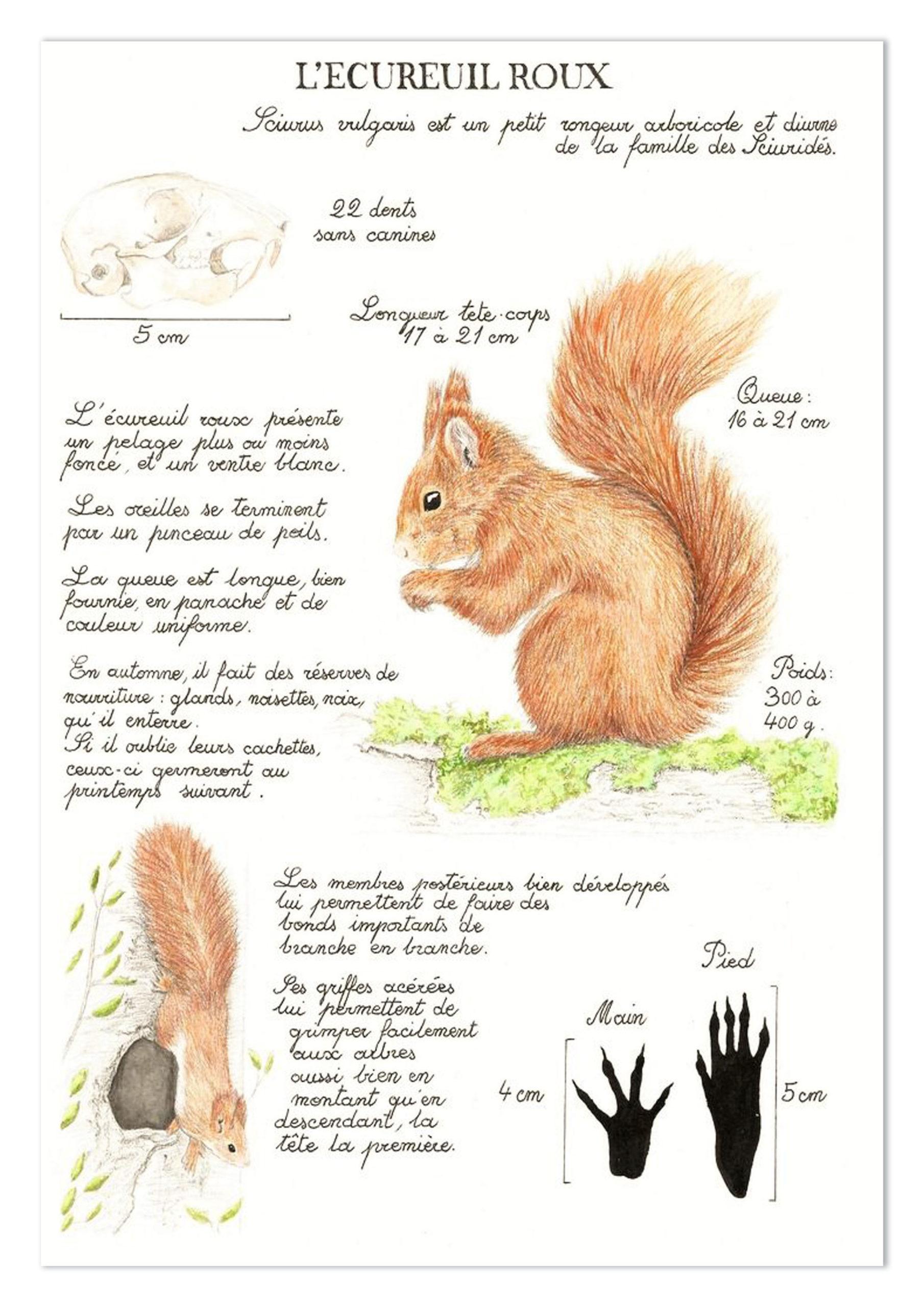 écureuil accueil