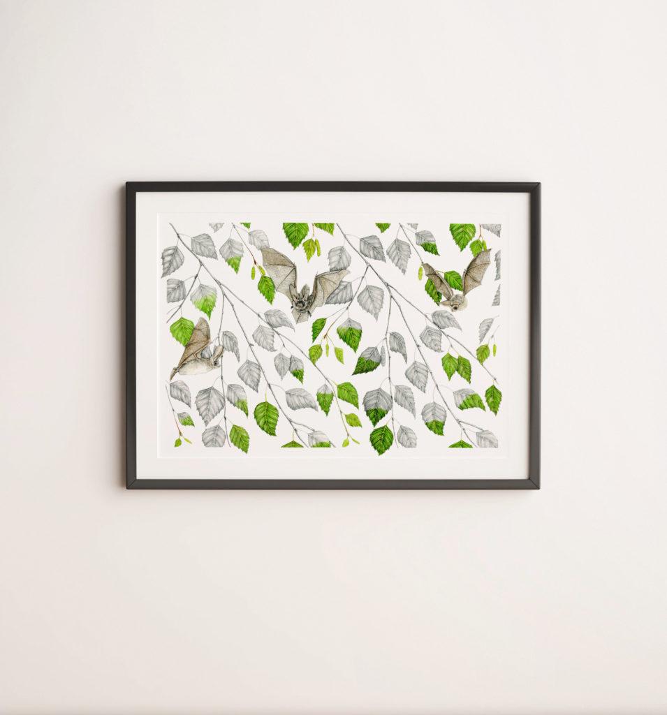 Illustration originale Alicia Pénicaud, oreillard gris, illustration de motif, dessin chauve-souris, reproduction d'art encadrement