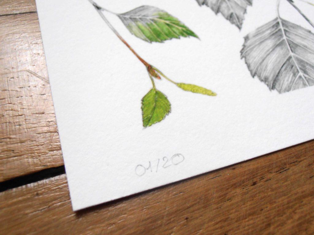 Illustration originale Alicia Pénicaud, oreillard gris, illustration de motif, dessin chauve-souris, illustration botanique, dessin branches de bouleau, reproduction d'art numérotée et signée