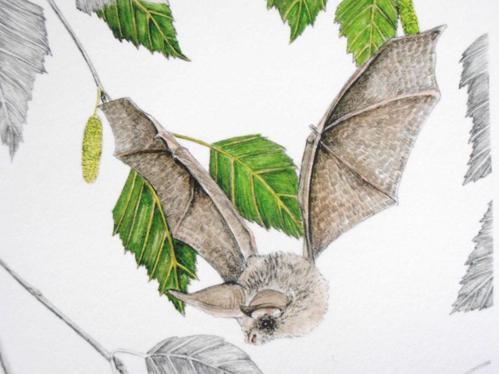 Illustration originale Alicia Pénicaud, oreillard gris, illustration de motif, dessin chauve-souris, illustration botanique, dessin branches de bouleau, reproduction d'art