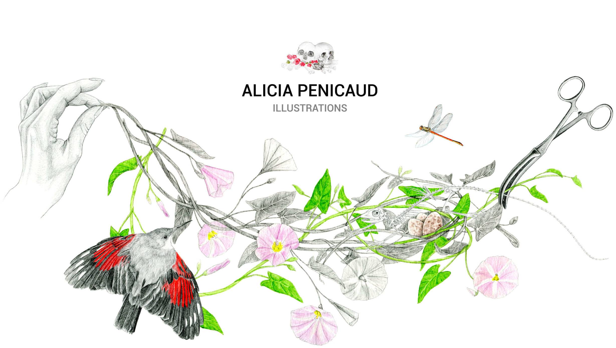 illustration site Alicia Pénicaud Illustrations, illustration originale Alicia Pénicaud, illustration naturaliste, illustratrice freelance France, illustratrice Limoges, illustration d'objet, illustration luxe, illustration médicale, illustration animalière, illustration portrait, illustration packaging