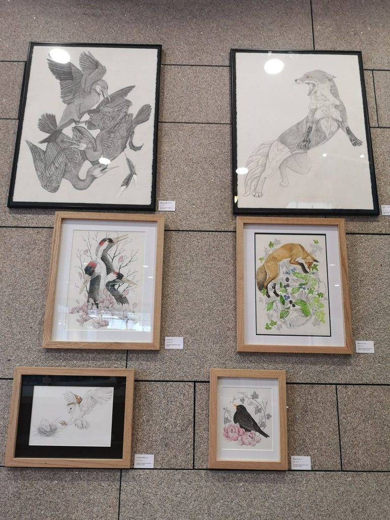 exposition Alicia Pénicaud, exposition faune et flore, exposition illustration, illustration, exposition art animalier, exposition BFM Limoges, exposition dessins Limoges, limousin, artiste limousin, Alicia Pénicaud Illustrations, illustrations naturalistes