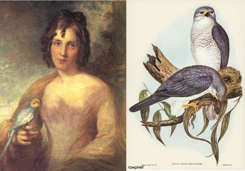 Elizabeth Gould,  illustration ornithologique, illustrations naturalistes, femmes et l'illustration naturaliste, histoire de l'illustration naturaliste, femmes et l'histoire de l'illustration naturaliste