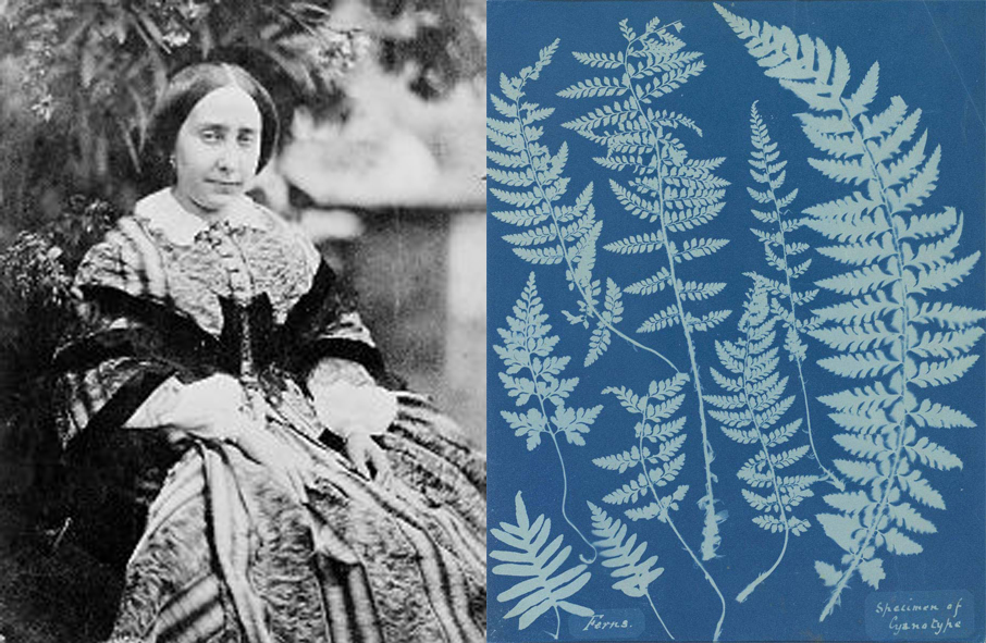Anna Atkins,  illustration botanique, illustrations naturalistes, femmes et l'illustration naturaliste, histoire de l'illustration naturaliste, cyanotype, femmes et l'histoire de l'illustration naturaliste