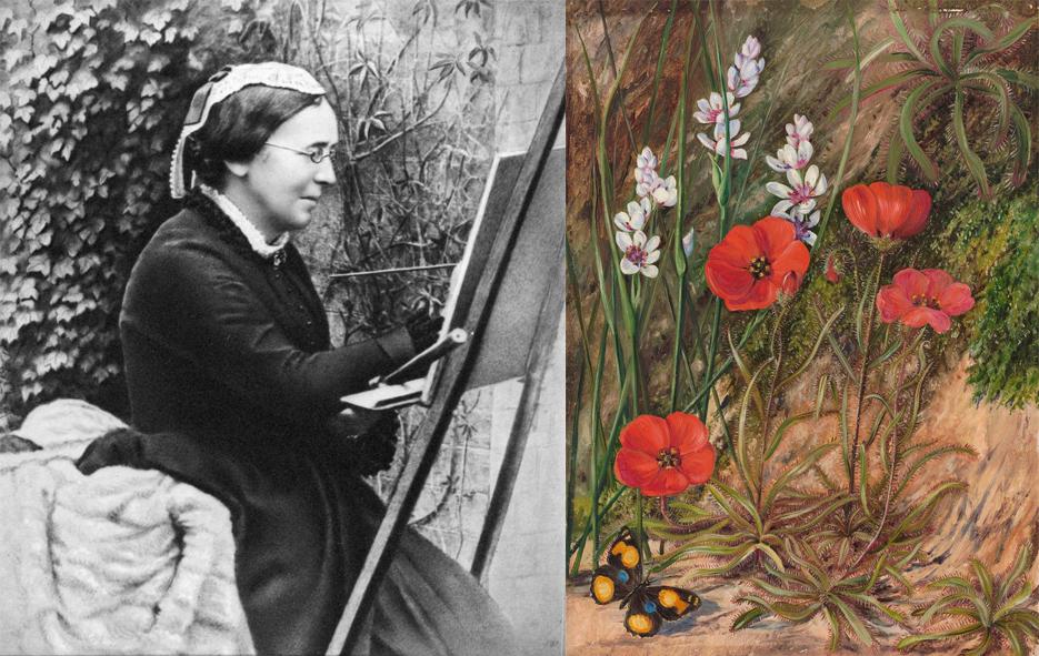 Marianne North, illustration botanique, illustrations naturalistes, femmes et l'illustration naturaliste, histoire de l'illustration naturaliste, femmes et l'histoire de l'illustration naturaliste