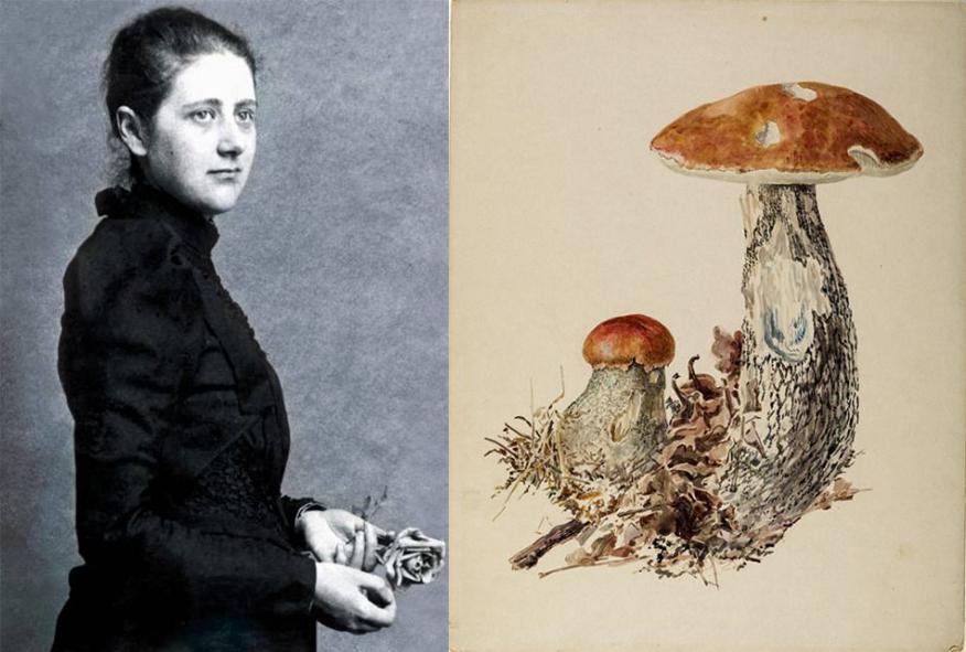 Beatrix Potter, illustrations naturalistes, femmes et l'illustration naturaliste, histoire de l'illustration naturaliste, femmes et l'histoire de l'illustration naturaliste