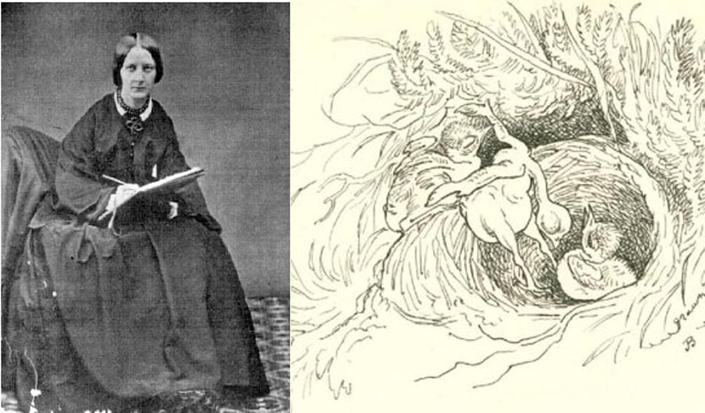 Jemima Blackburn, illustrations naturalistes, femmes et l'histoire de l'illustration naturaliste
