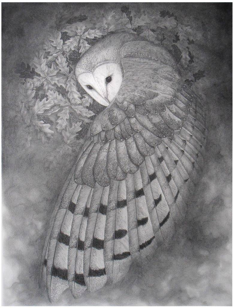 dame blanche, légende occitane, Occitanie, légende Périgord-Limousin, chouette effraie, illustration originale Alicia Pénicaud