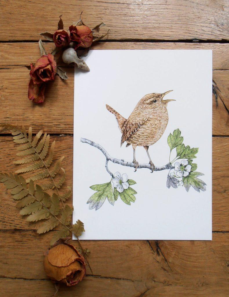 Illustration originale Alicia Pénicaud, reproduction d'art, affiche, illustration troglodyte mignon, illustration naturaliste, dessin oiseau, affiche oiseaux