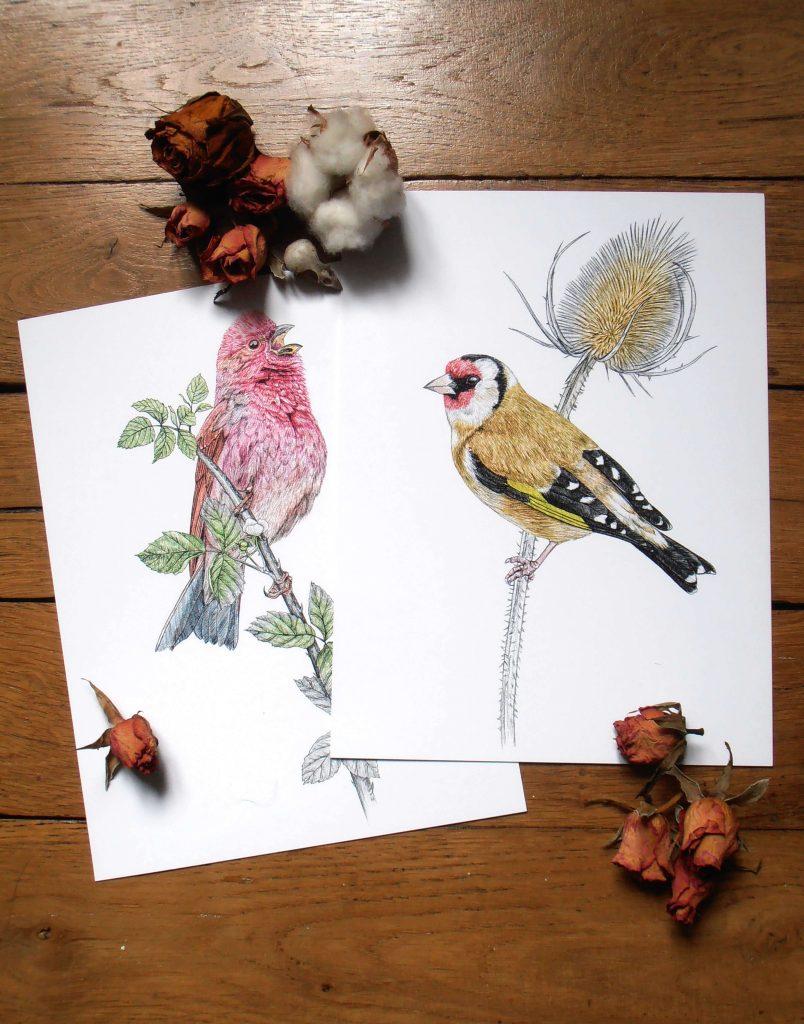 Illustration originale Alicia Pénicaud, reproduction d'art, affiche, illustration roselin cramoisi, illustration chardonneret, illustration naturaliste, dessin oiseau, affiche oiseaux