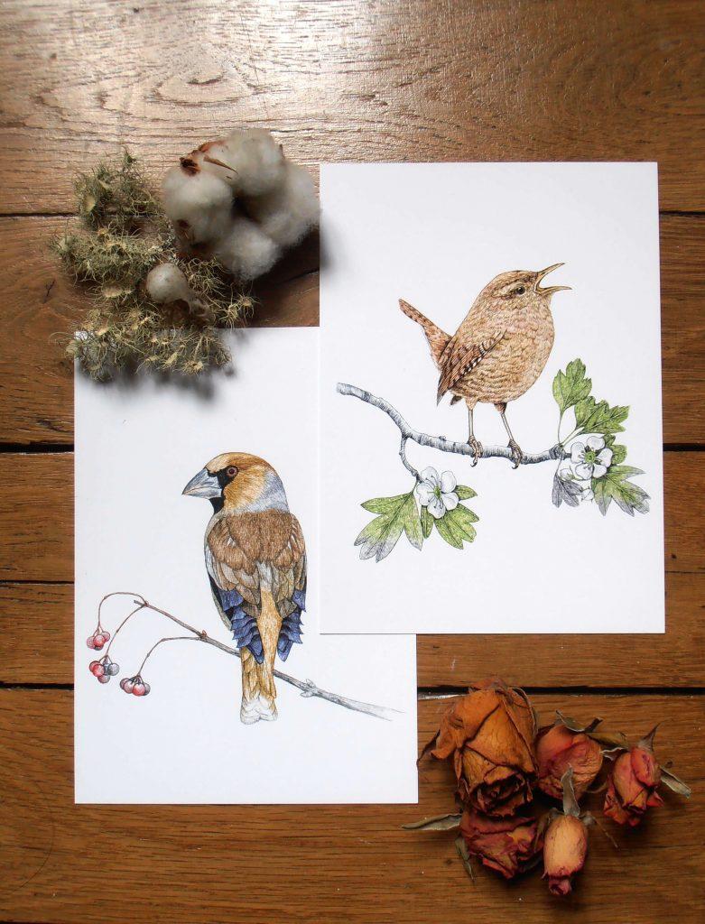 Illustration originale Alicia Pénicaud, reproduction d'art, affiche, illustration grosbec casse-noyaux, illustration troglodyte mignon illustration naturaliste, dessin oiseau, affiche oiseaux
